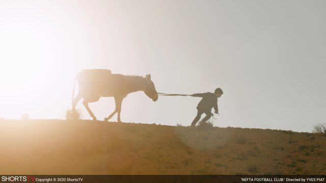 Ein Junge zeiht einen Esel über einen Hügel