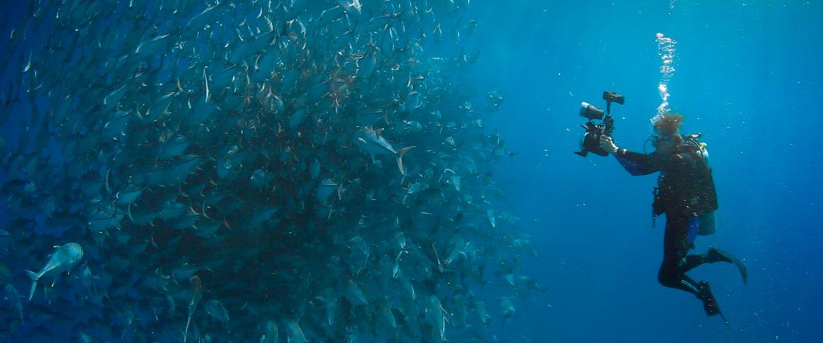 Unterwasserfotograf nimmt einen Schwarm Fische auf